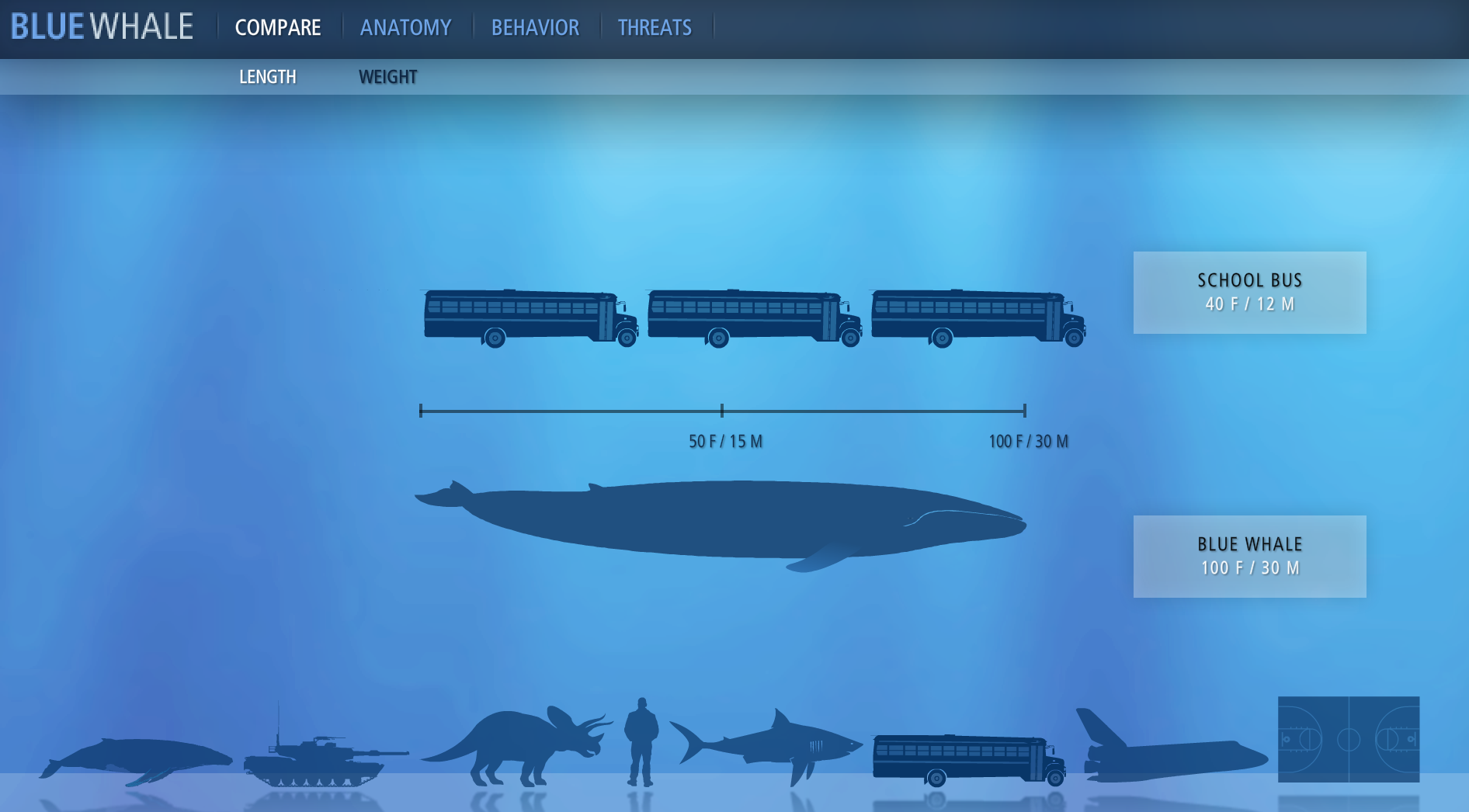blue whale � information is beautiful awards